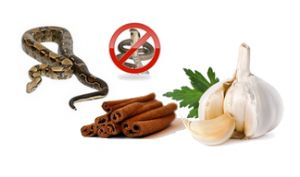 Household remedies for snake repellant