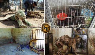 7 Foto Hewan Ini Yang Buktikan Manusia Itu Sekejam Binatang