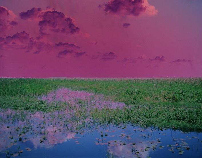 Sleep (Swamp) by Catherine Yass - Florida Everglades