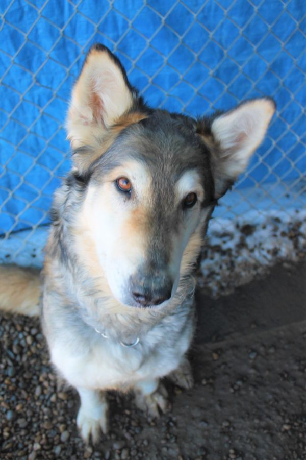 Dogs For Adoption Near Chestermere Ab Petfinder Dog Adoption Help Homeless Pets Dogs