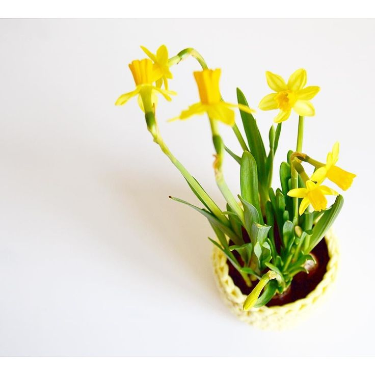   Yellow   #crochetgirlgang#eliasfrank#daffodils#creativehappylife#flatlay#slrphotography#white#green#detail#etsyuk#norwich#norfolk#norfolkmama#crochetblog#crochetconcupiscence#lovecrochet#lifeofaworkingmama#blooms#craftbuzz#spring#happy#crochetbasket#handmadecurator#crochet#chunkyyarn#closeup#crochetaddict#crochetersofinstagram#yarnlove#moderncrochet by _eliasfrank