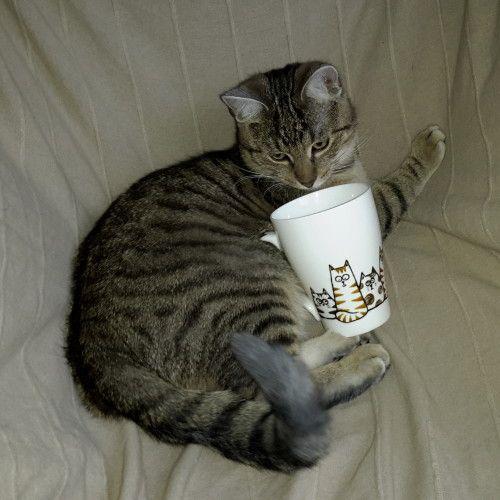 cat & mug