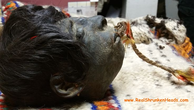 Authentic Shrunken Head For Sale!  We have sold more Genuine Shrunken Heads, than anyone in World History!! www.RealShrunkenHeads.com