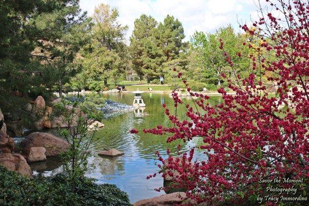 Cherry Blossom Tree At Ro Ho En Cherry Blossom Tree Arizona Travel Garden