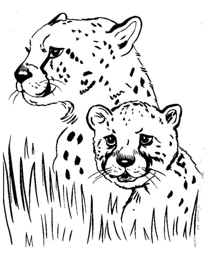 Cheetah Cubs Coloring Pages In 2020 Animal Coloring Pages Coloring Pictures Of Animals Animal Coloring Books