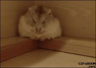 "gifsboom: "" Hamster Rolls of Ledge After Falling Asleep "" dumbass"