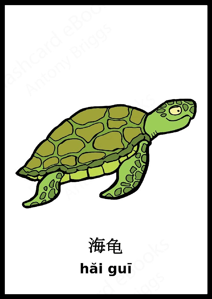 Chinese Turtle Flashcard - Learn Chinese Vocabulary - Animals - Out now on Amazon #pinyin #Chinese #Flashcards