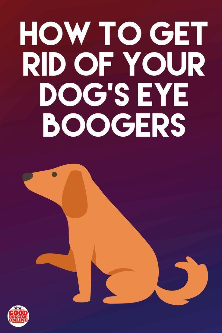c23d73b7b2ccb07760788a870dbff003 - How To Get Eye Boogers Out Of Dog S Eyes