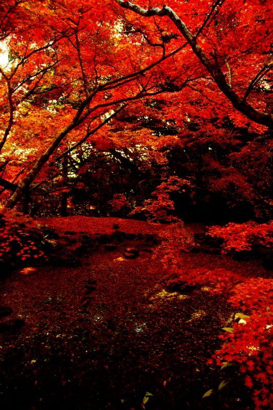Autumn in Kunen-an garden in Saga, Japan