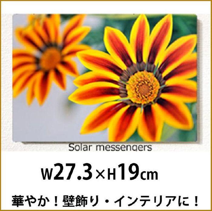壁掛けアートアートパネル風景画フォトグラファーy2-hiro写真P3黄色い花マクロ植物黄自然母の日花ギフトインテリア雑貨キャンバスジグレー版画