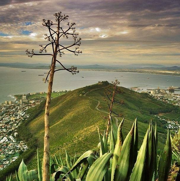 View over Sea Point from Lions Head mountain in Cape Town, South Africa. BelAfrique your personal travel planner - www.BelAfrique.com
