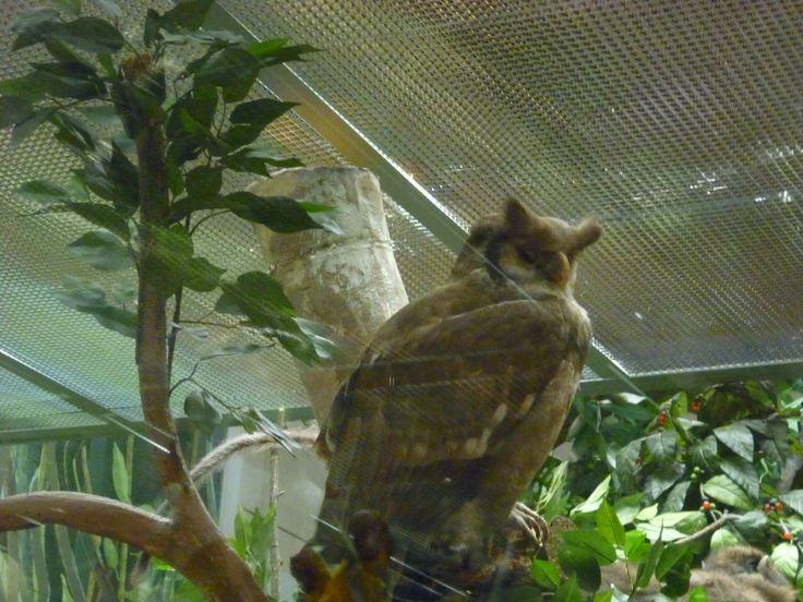 Darwin's museum of natural history