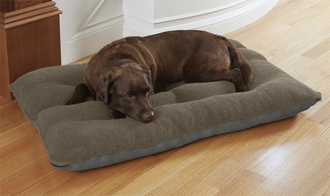 Fleecelock Futon Bed With Memory Foam Large Dogs 70 100 Lbs Somniar Despert Pinterest Largest Dog Beds And