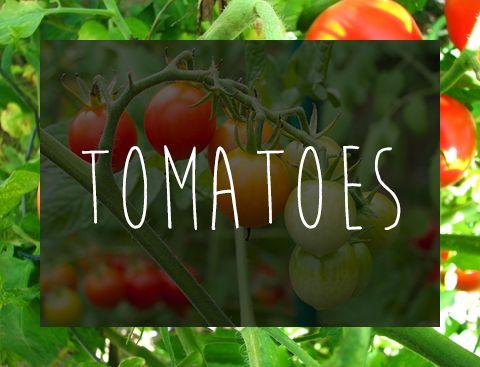 7 edible plants to grow in your garden; no green thumb needed. #Garden #Plants #Vegetables #Fruits #dfgiveaway