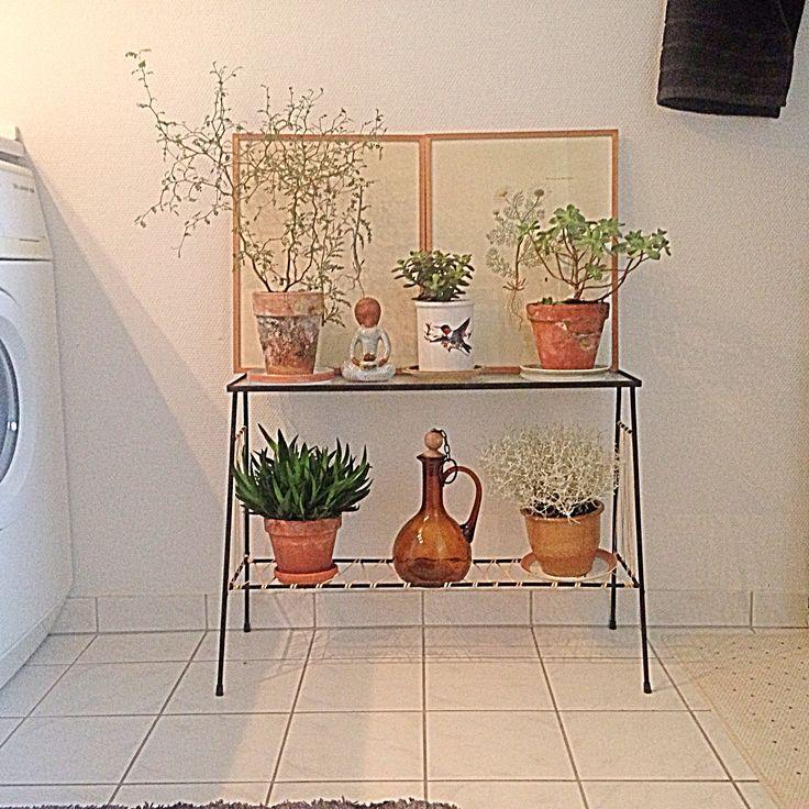 My bathroom plants
