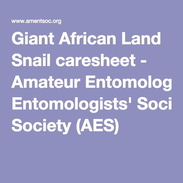 Giant African Land Snail caresheet - Amateur Entomologists' Society (AES)