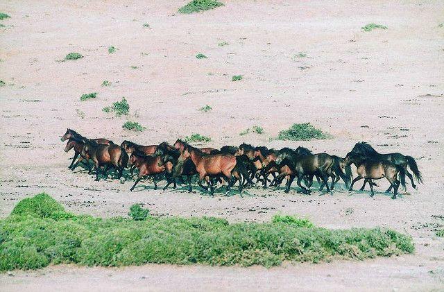 https://flic.kr/p/5WhX7C |  Δυτική Ελλάδα - Αιτωλοακαρνανία - Δήμος Στράτου Άγρια άλογα Πεταλά