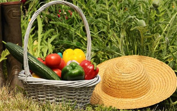 What we plant and what are transplanted in April. - Τι φυτεύουμε και τι μεταφυτεύουμε τον Απρίλιο | Smile Greek