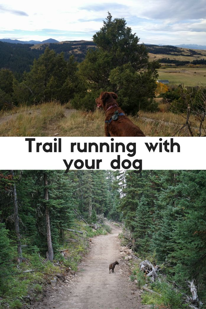 Ready to try trail running with your dog? Here's everything you need to know.