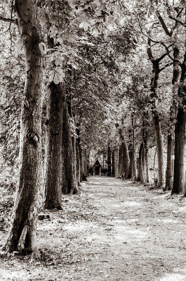 Condoleance- en aandachtskaart met bomen van fotograaf Hans Lunenburg