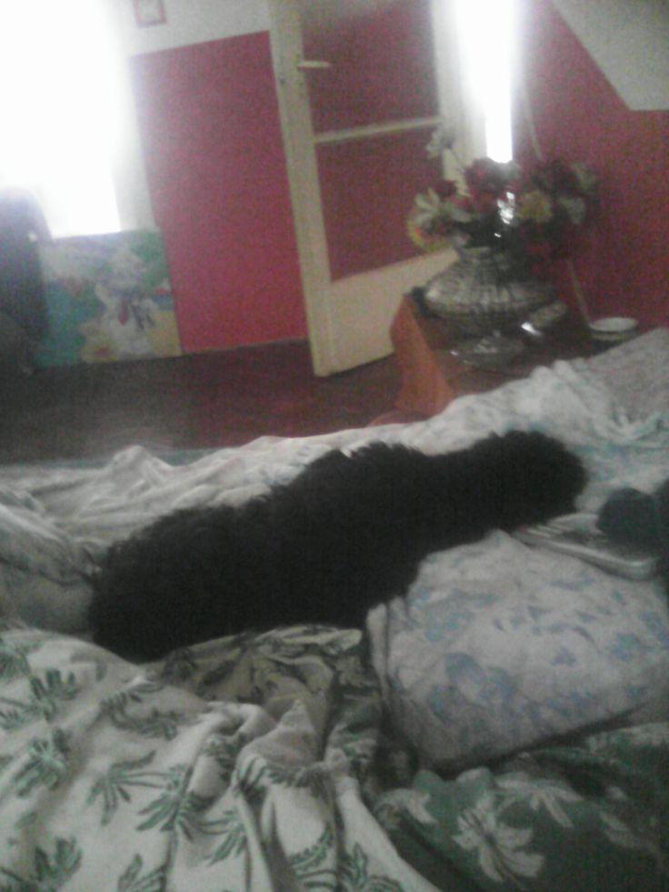 Gazdi ágya a legjobb