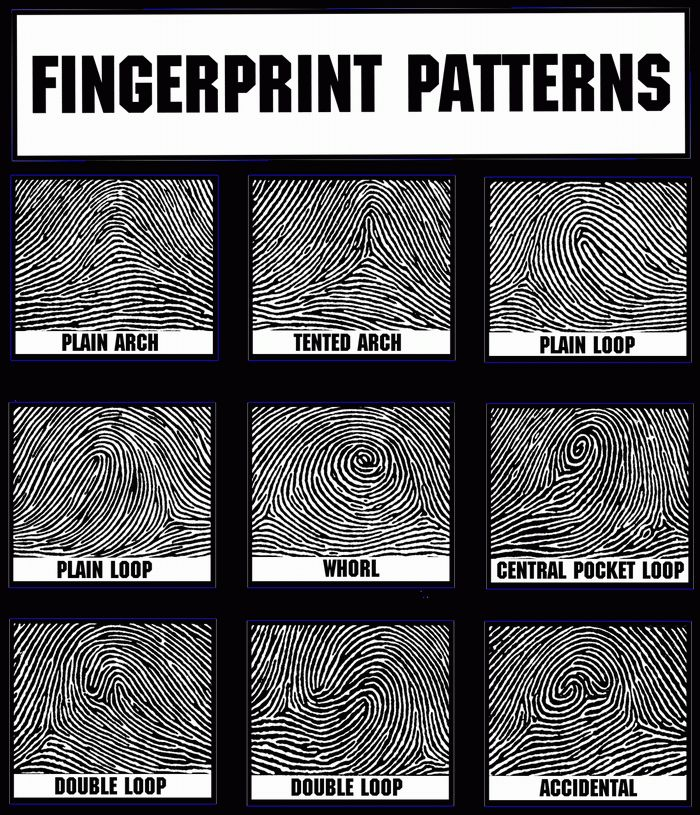 Picture of fingerprint patterns for crime display during 8th grade CSI unit