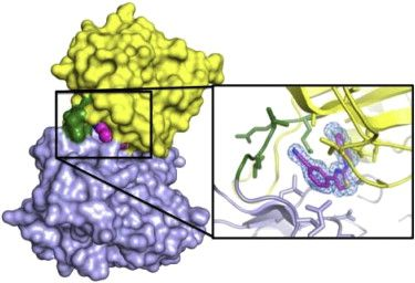Structure - The Crystal Structure of the Catalytic Domain of the NF-κB Inducing Kinase Reveals a Narrow but Flexible Active Site