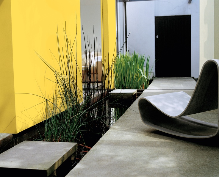 Sandtex feature wall in lemon zest exteriors pinterest Garden wall color ideas