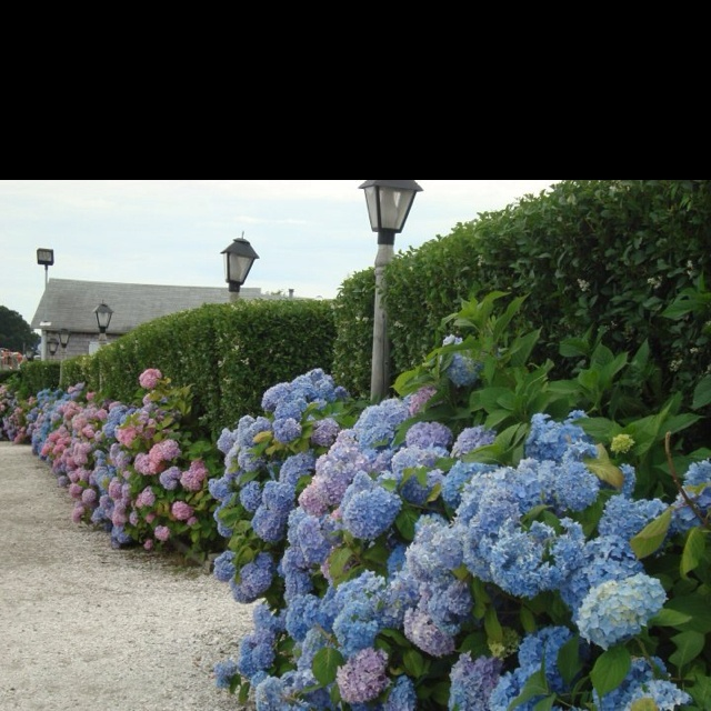 24 Best Images About Mulch Mashpee, MA On Pinterest