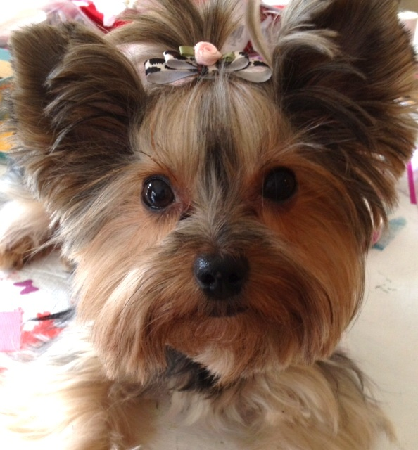 Animal Print with Light Pink Flower Doggie Bow from Kute Creations · Storenvy