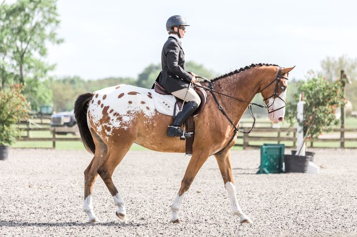 On the blog - The Florida Horse Park - Jen Oswald Phtography