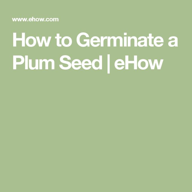 How to Germinate a Plum Seed | eHow