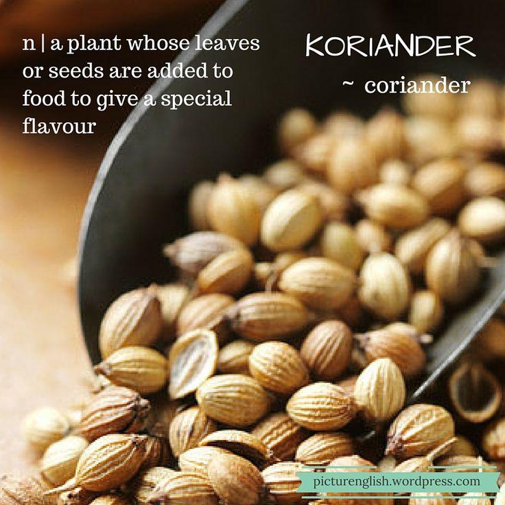 Coriander / Koriander