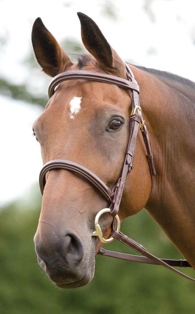 SHIRES SALISBURY FAIRFORD TRENSE 292 pferd leder gepolstert zaumzeug stift in Sport, Reit- & Fahrsport, Trensen & Zubehör   eBay