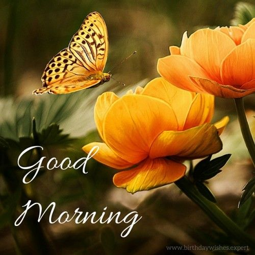 Good Morning Image with orange flowers and butterfly ...♥♥...