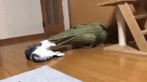 Help! Crocodile eats cat!
