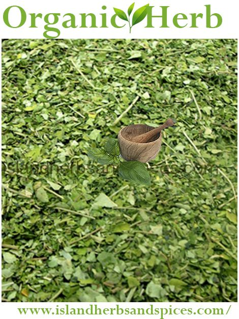 healing herbs of jamaica pdf