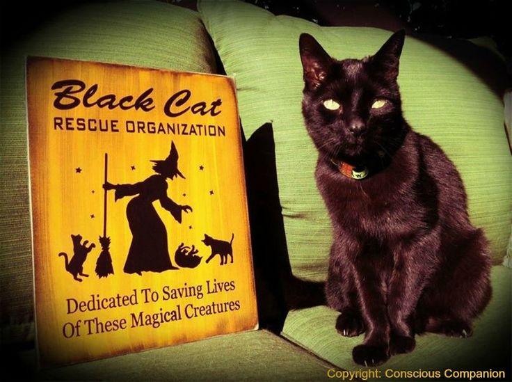 Cats Protection Blackcats