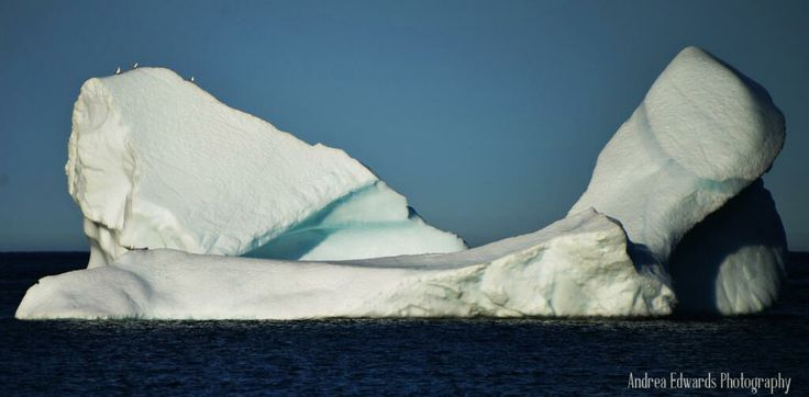 This #iceberg #Torbay had a few visitors off the #EastCoastTrail #Newfoundland Embedded image permalink