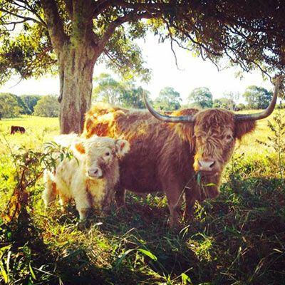 Animals - The Farm Byron Bay