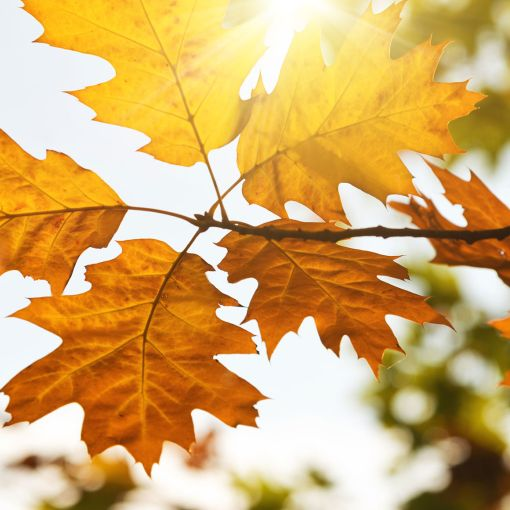 Autumn Holidays in Greece