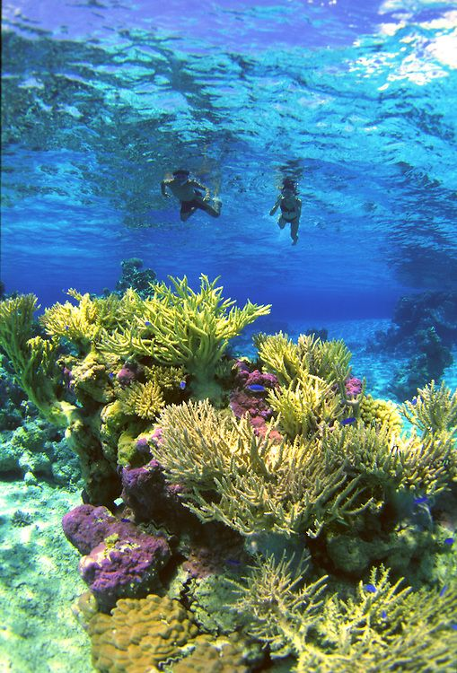 Image Result For Bora Bora Scuba Diving Awesome Bora Bora