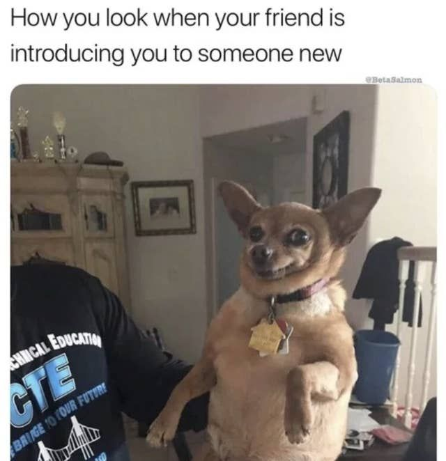 15 Fresh Animal Memes That Will Make Your Day 100 Better Funny Animal Jokes Funny Cat Memes Funny Animal Quotes