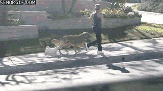 Dog Species Name Funny Giff #661 - Funny Dog Giffs| Funny Giffs| Dog Giffs