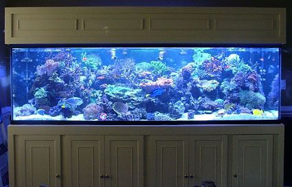 100 gallon fish tank 250 100 gallon saltwater aquarium for Fish tank measurements