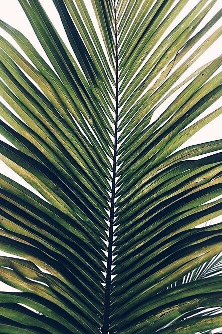 palm fronds tumblr - photo #36