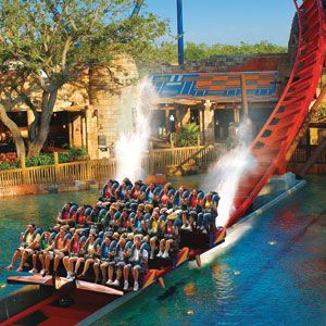25 Best Ideas About Busch Gardens Tampa Bay On Pinterest Busch Gardens Tampa Bush Garden