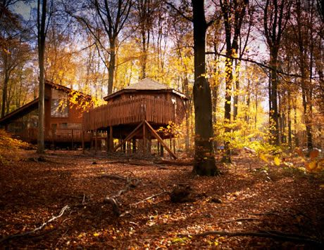 Golden Oak Treehouse cabin at Blackwood Forest #Hampshire #ForestRetreat #UKgetaway #Autumn