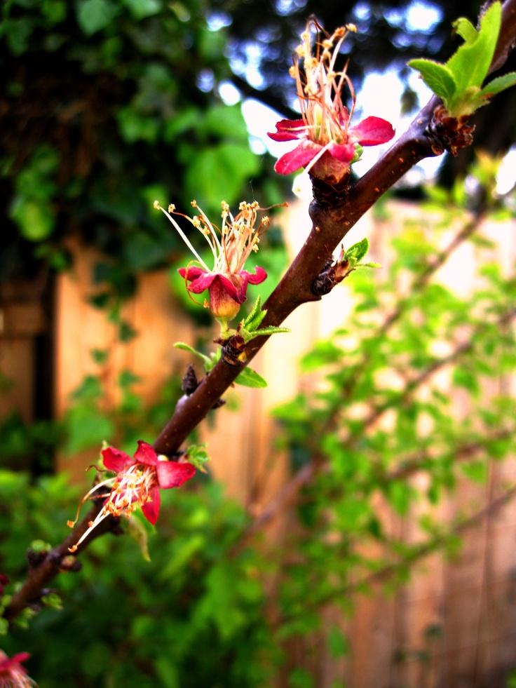 Bloomin'