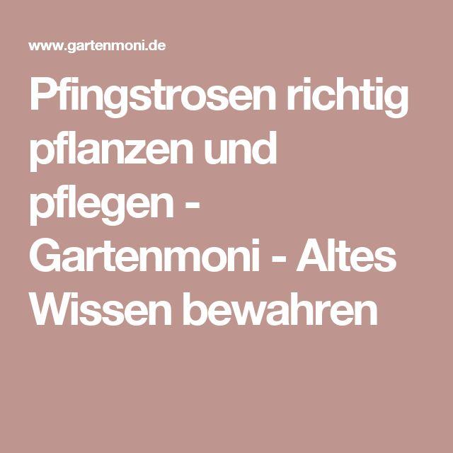 Die 25+ Besten Ideen Zu Pfingstrosen Pflanzen Auf Pinterest | Rosa ... Sommer Blumen Pflanzen Pflege